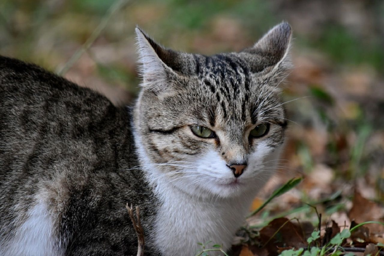 Vidas de un Gato